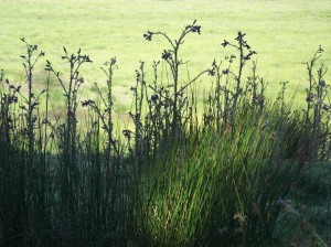 Meadow at Bryngarw