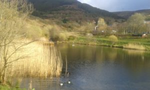 Image of lake at Parc Calon Lan